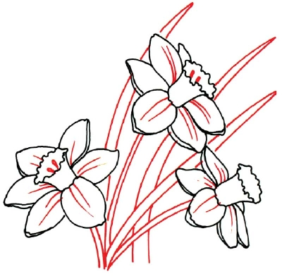 Jonquil Flower Drawing How to Draw Daffodils